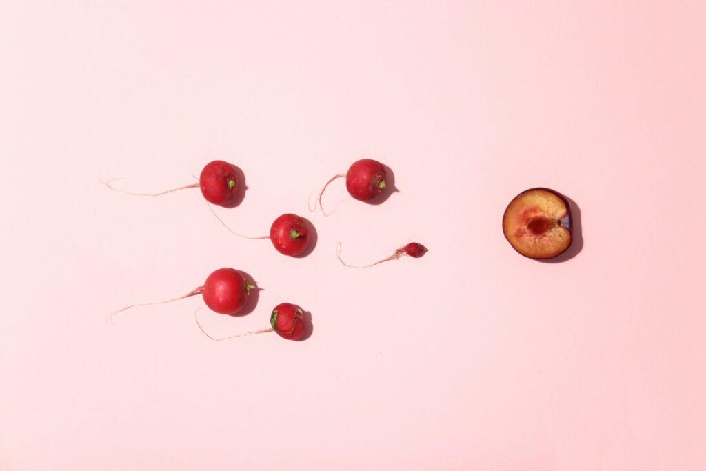 זרע וביצית ויחסי ינג - יין